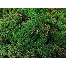 DARK GREEN LICHEN 125g