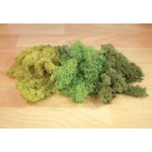 MIXED GREEN LICHEN 125g
