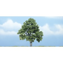 4 inch Beech Tree (Pack of 1)